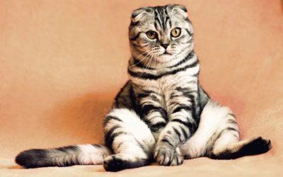 A quel âge un chaton est sevré ?