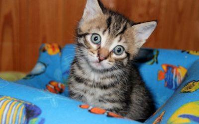 A quel âge un chat devient calme ?