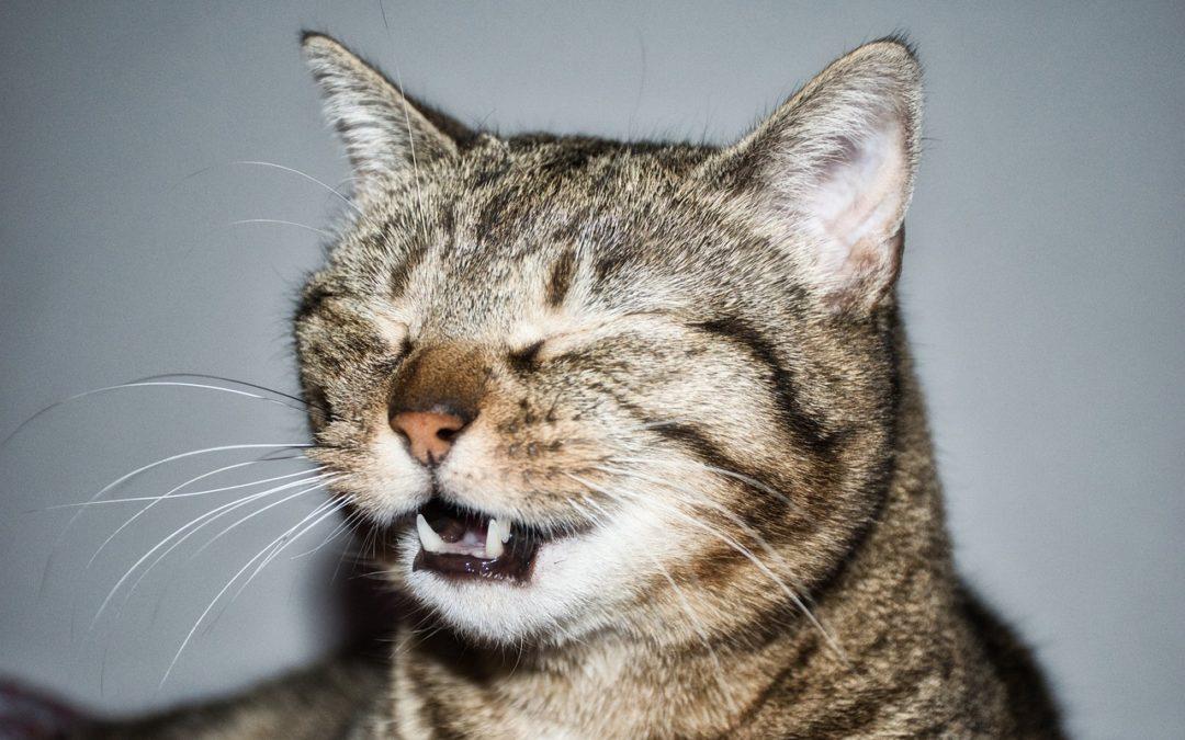 mon chaton eternue