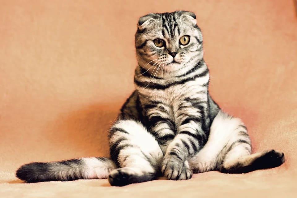 quel poids pour un chaton
