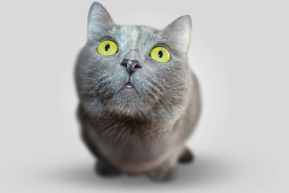 vue du chat