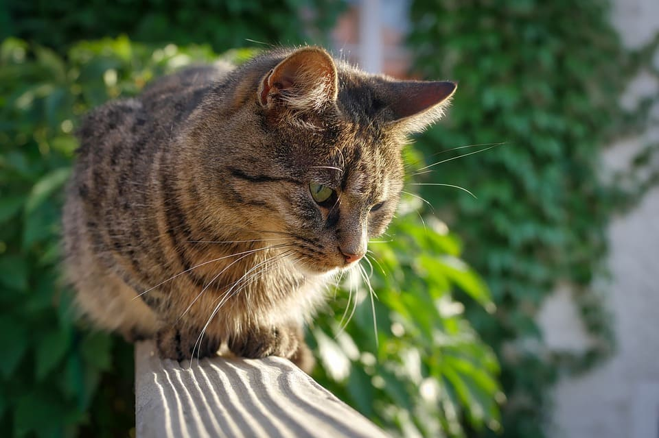 protection chat balcon