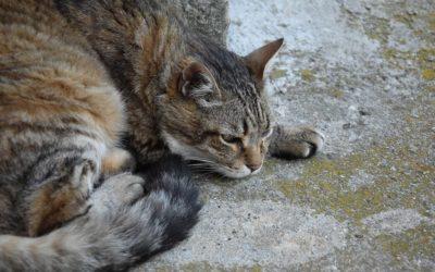 Chat qui dort beaucoup : Ce qu'il faut savoir