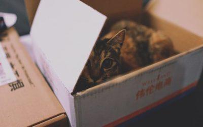 Pourquoi les chats aiment les cartons ?