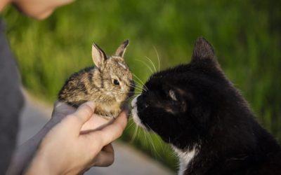 Chat et lapin : Comment les faire cohabiter ?