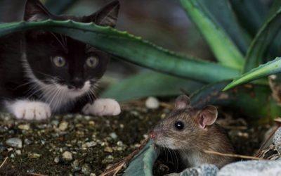 Comment attirer un chat qui se cache ?