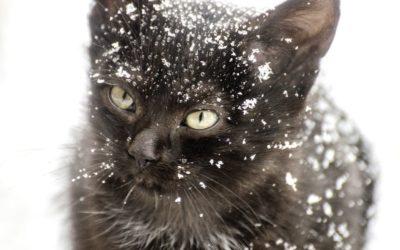 Chat qui a froid : Comprendre et agir