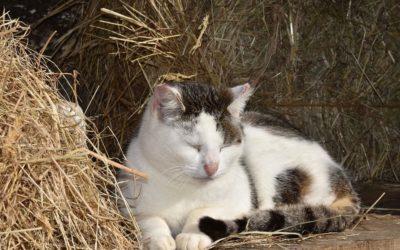 Positions de sommeil du chat : Les significations