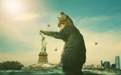 Pourquoi mon chat trempe-t-il sa patte dans l'eau ?